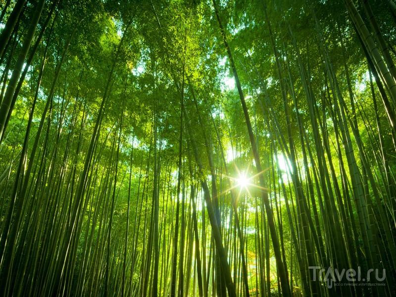 Бамбуковый лес Сагано расположен на территории парковой зоны Арасияма, Япония / Япония
