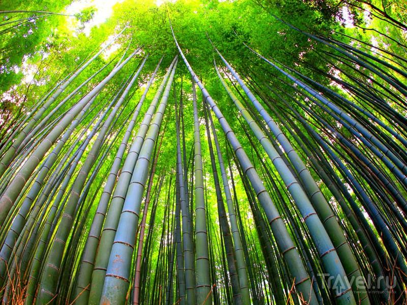 Бамбуковая роща Сагано внесена  в сотню охраняемых достопримечательностей Японии / Япония