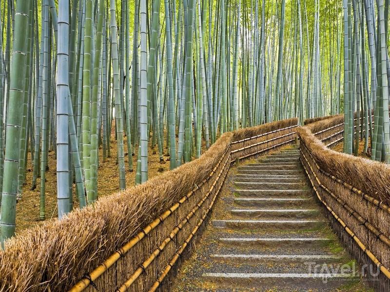 Бамбуковые стебли, качаясь от легкого дуновения ветра, издают мелодичные звуки, Япония / Япония