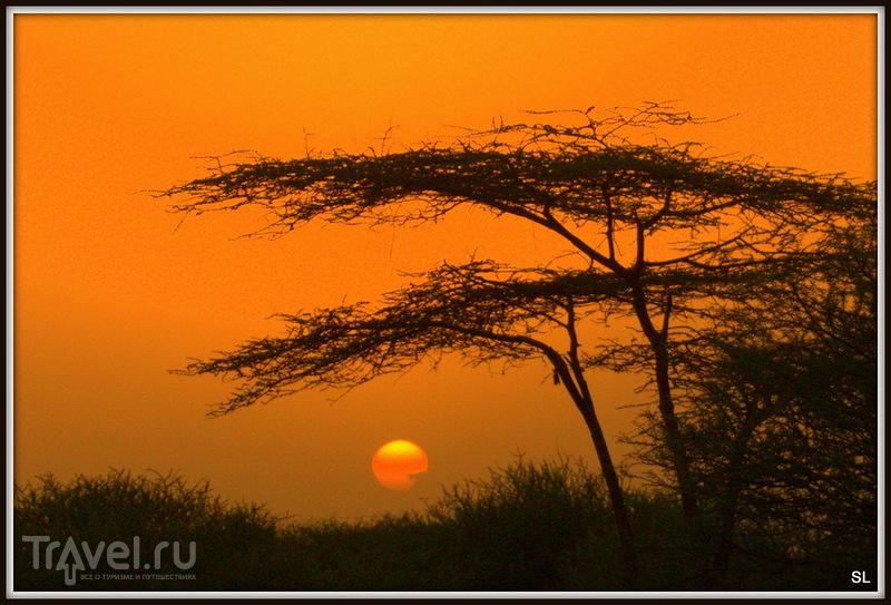 В национальном парке Аваш, Эфиопия / Фото из Эфиопии