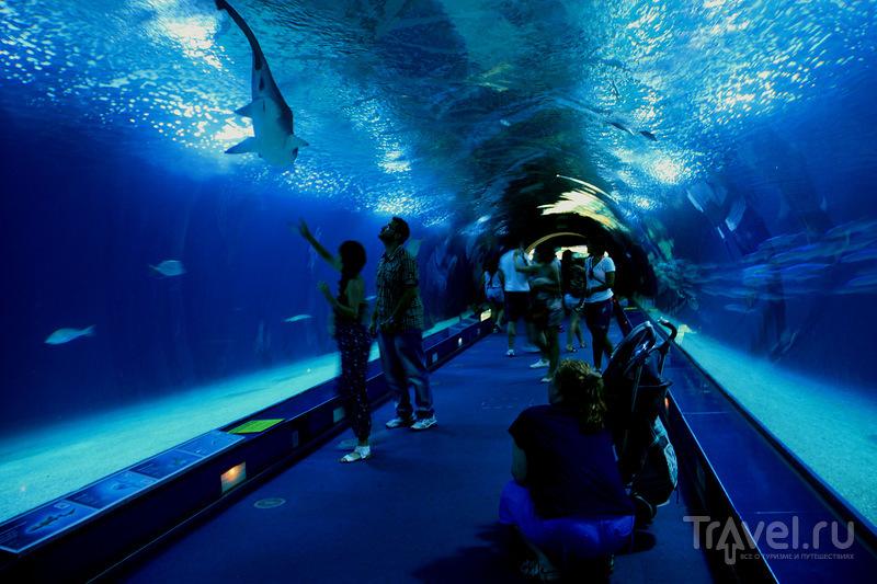 Валенсия, аквариум