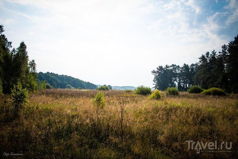Беловежская пуща. Озерное кольцо / Фото из Белоруссии