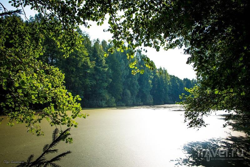 Озеро Плянта-3 в Беловежской пуще, Белоруссия / Фото из Белоруссии