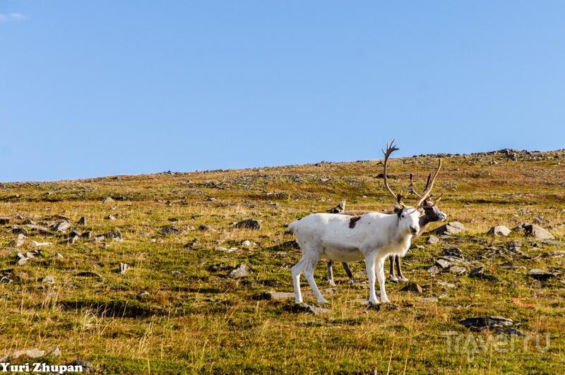 В провинции Нордкап, Норвегия / Фото из Норвегии