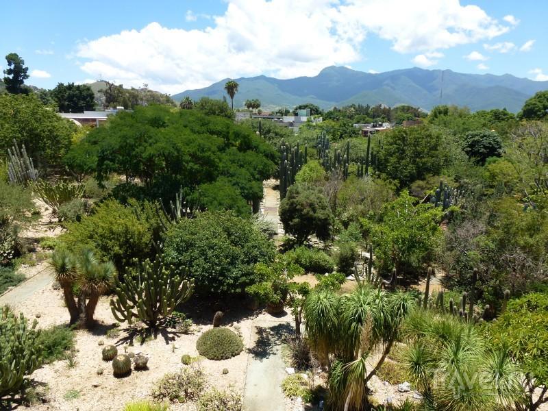 Оахака - город маленьких домов и больших кактусов / Мексика