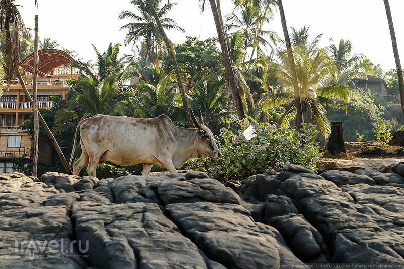 Немного о Гоа / Фото из Индии