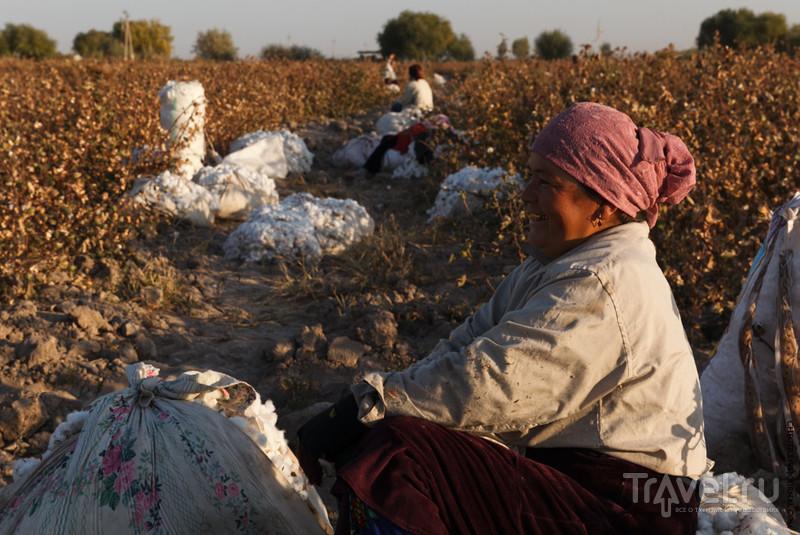 Как растут джинсы / Узбекистан