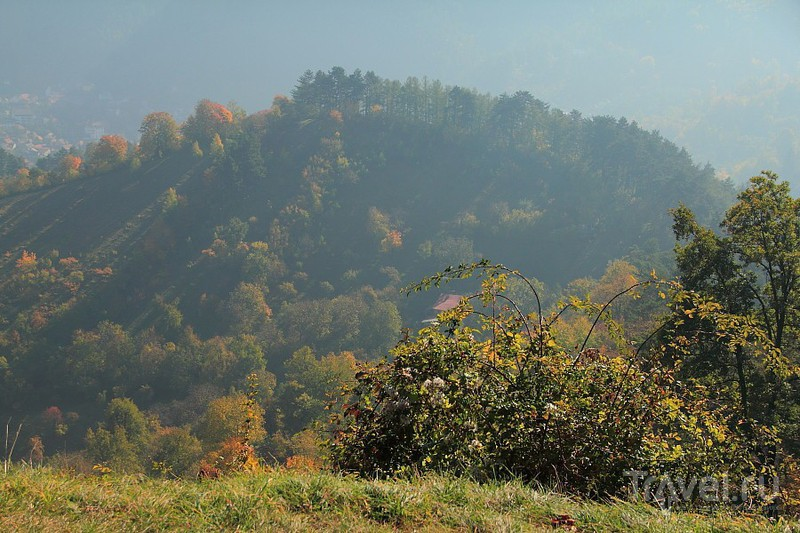 Пояна-Брашов - красота и чистейший воздух / Фото из Румынии