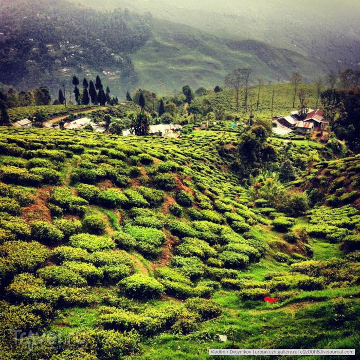 Так выглядят чайные поля сверху / Индия