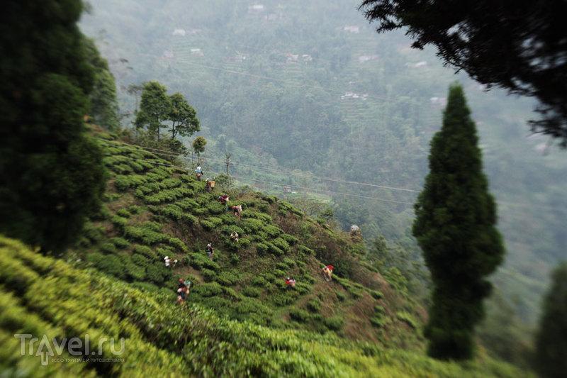 Дарджилинг. Пермит, джипы, чай / Индия