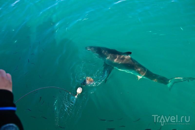 ЮАР. Купание с акулами / ЮАР