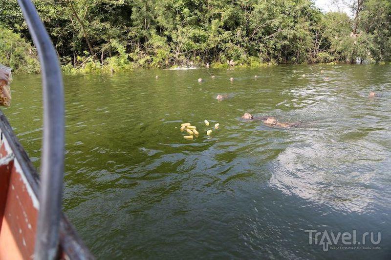 Обезьяний мир в Таиланде - Kaeng Krachan National Park / Таиланд