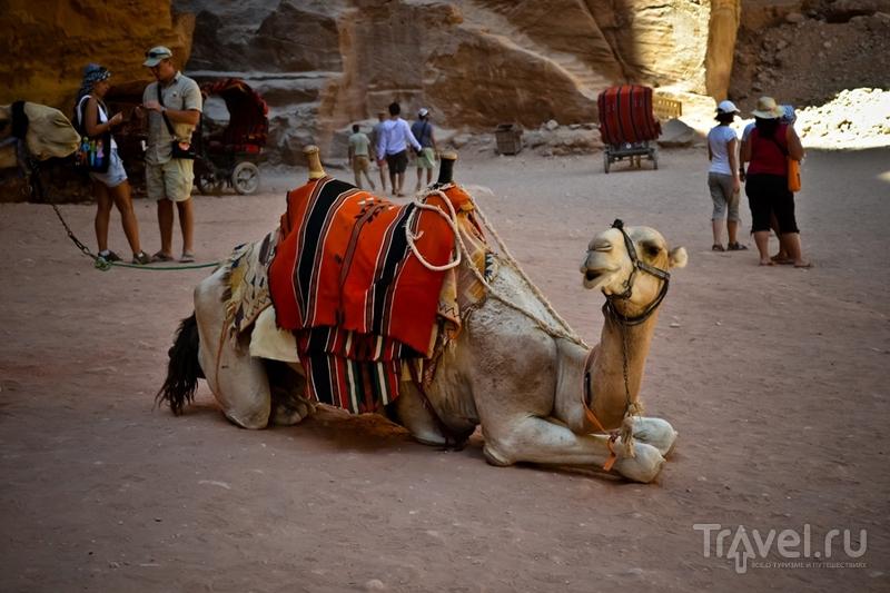 Древний город Петра / Фото из Иордании