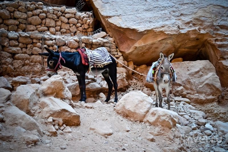 В городе Петра, Иордания / Фото из Иордании