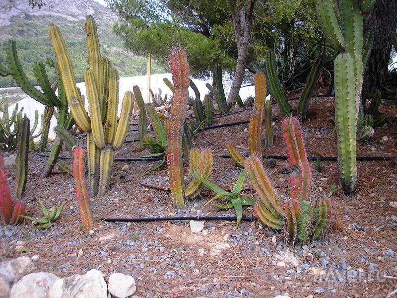 Сад кактусов Альгара / Испания