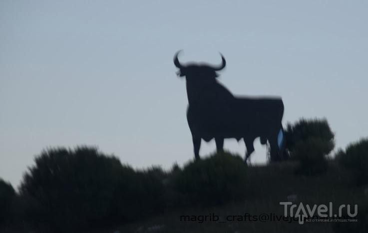 Тапас-бары Андалусии. Тарифа / Испания