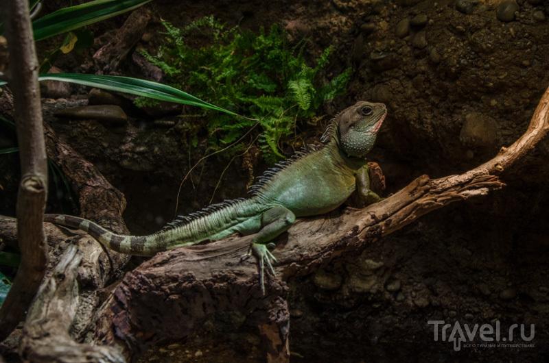 В террариуме базельского зоопарка / Фото из Швейцарии