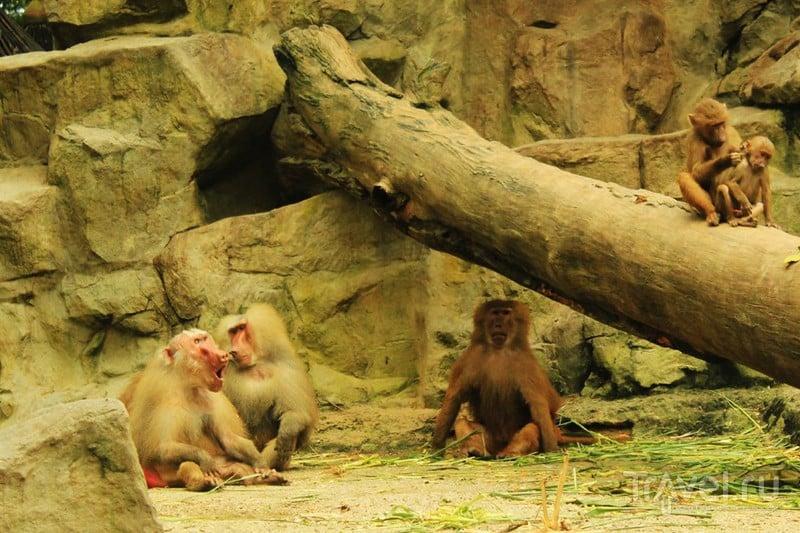 Сингапур. Зоопарк, Сентоза, Орчард / Сингапур