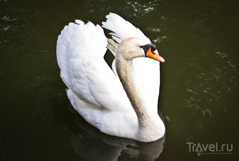 В Minnewater Park на Озере Любви в Брюгге, Бельгия / Фото из Бельгии