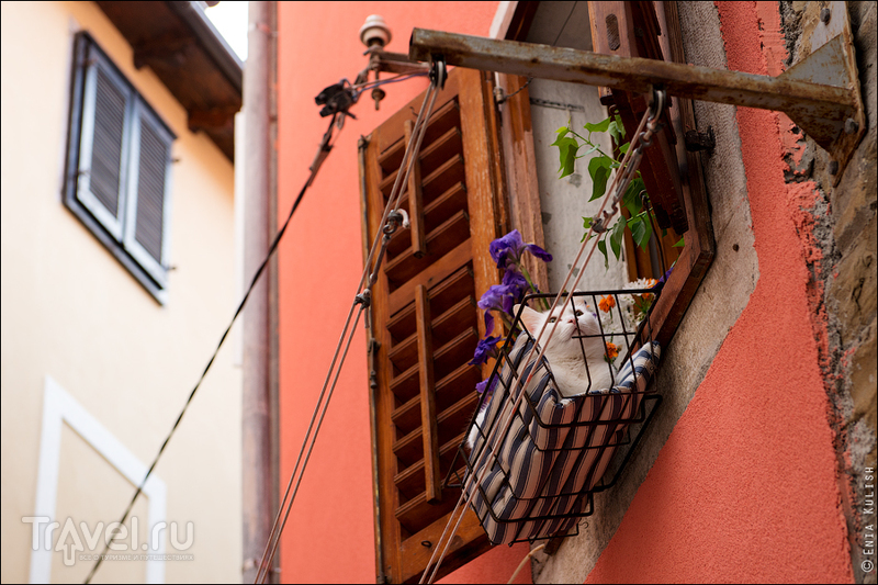 Образы Пирана / Фото из Словении