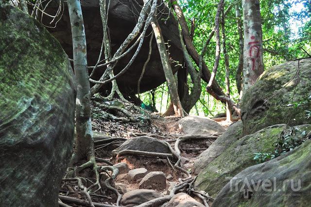 Камбоджа. Тропа к реке Kbal Spean / Камбоджа