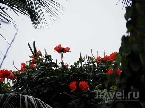 Шри-Ланка - Сад специй / Шри-Ланка