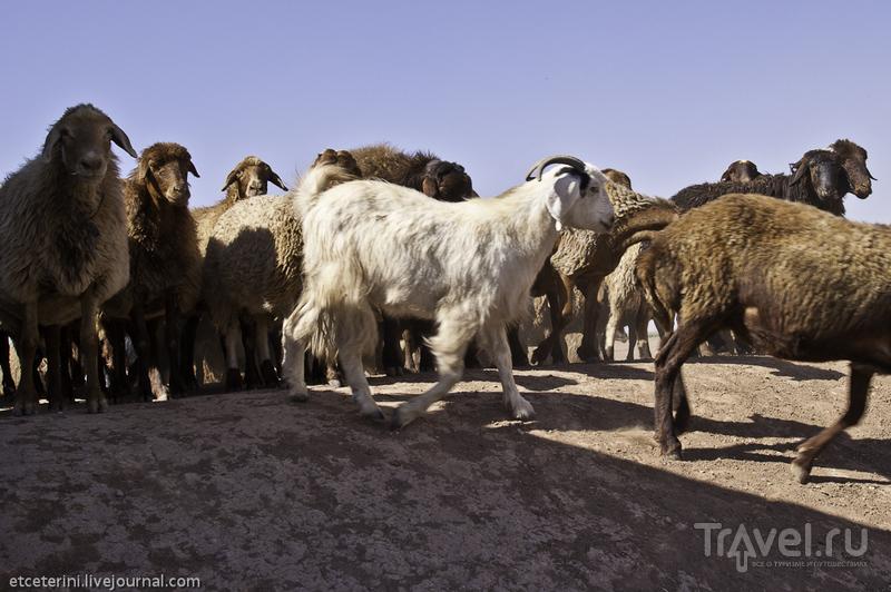 Нейшабур и Тус. В гостях у Хайяма, Фирдоуси и фермера Хамида / Иран