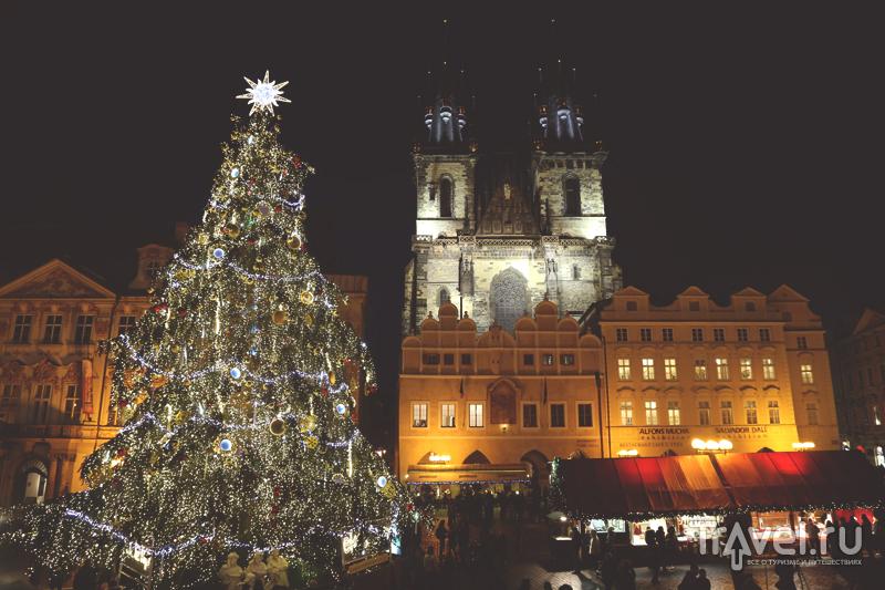 Большая Рождественская ель в Праге, Чехия / Чехия