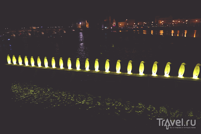 Светящиеся пингвины на берегу Влтавы в Праге, Чехия / Чехия