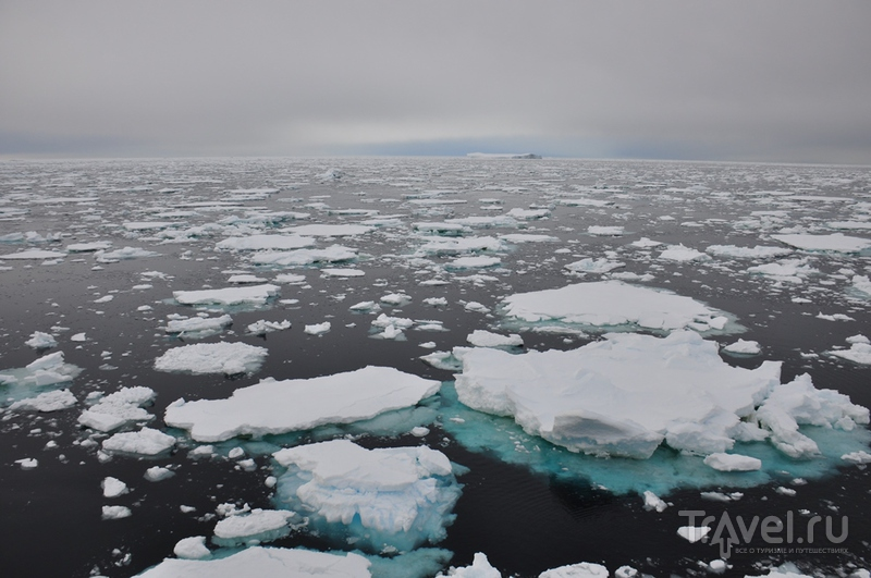 В Антарктике / Фото из Антарктики