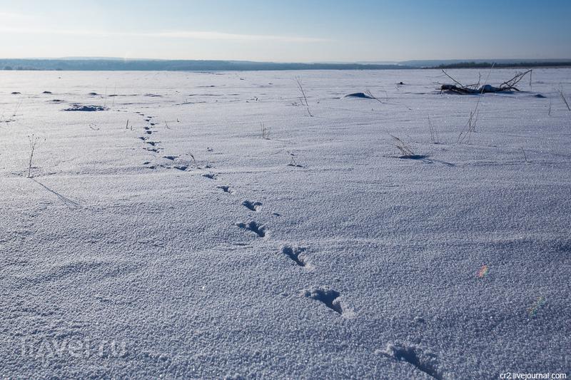 Окрестности Суздаля / Фото из России