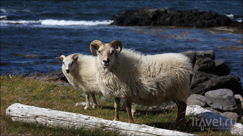 На полуострове Ватнснес, Исландия / Фото из Исландии