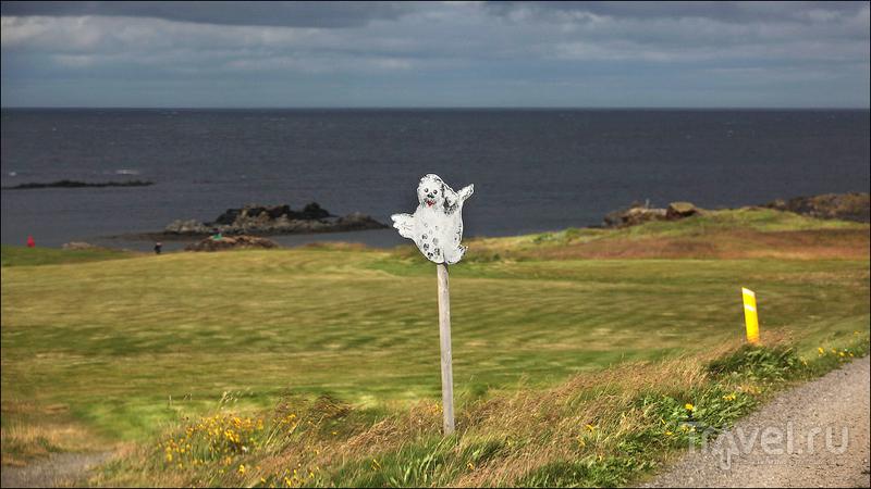 """Полуостров Ватнснес - """"Land of seals"""" / Фото из Исландии"""