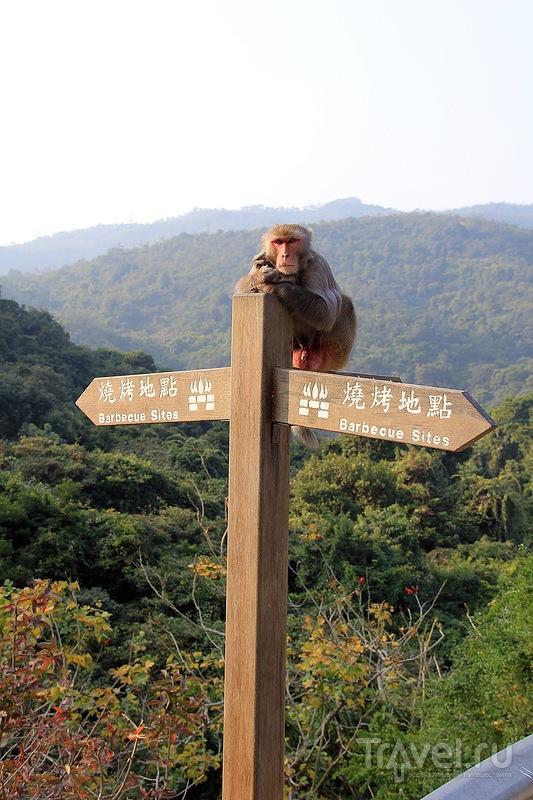 Гонконг, Kam Shan Country Park, также известный как Monkeys Hill / Гонконг - Сянган (КНР)