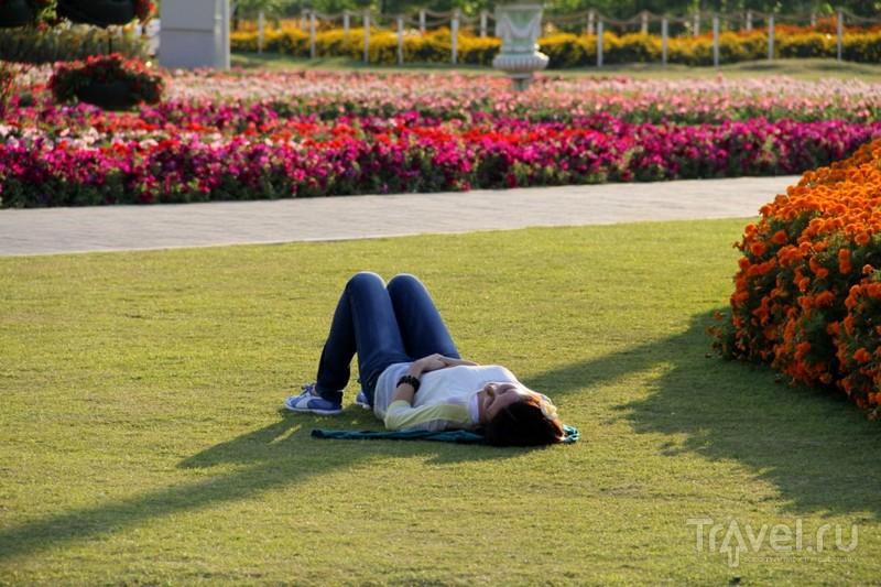 Dubai Miracle Garden - цветочное царство среди пустыни / ОАЭ