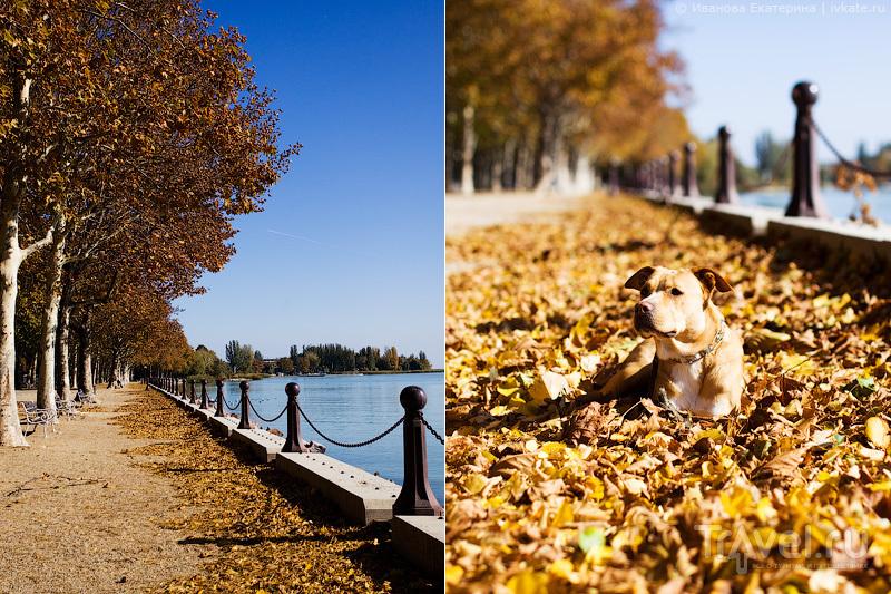 Автопутешествие в Европу с собакой / Белоруссия