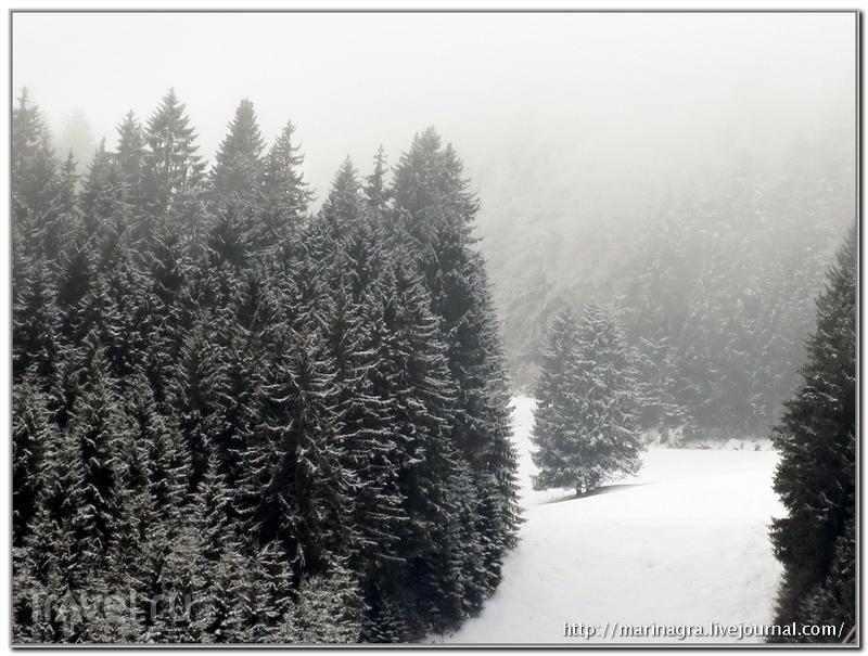 Зима в Шварцвальде / Германия