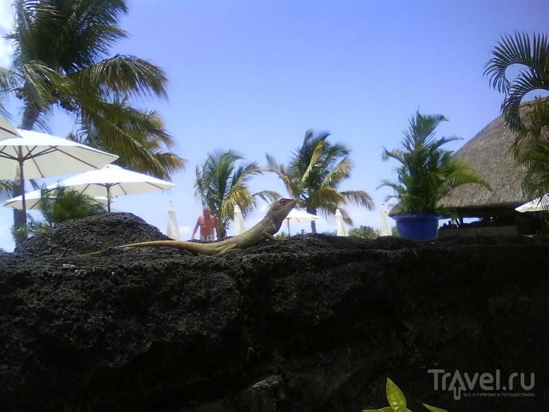 Бюль - бюль / Маврикий