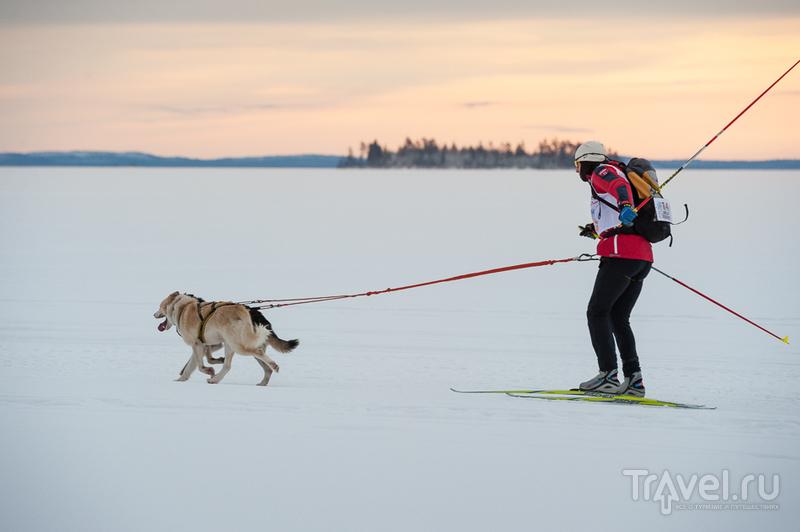 Бег снежной собаки / Россия