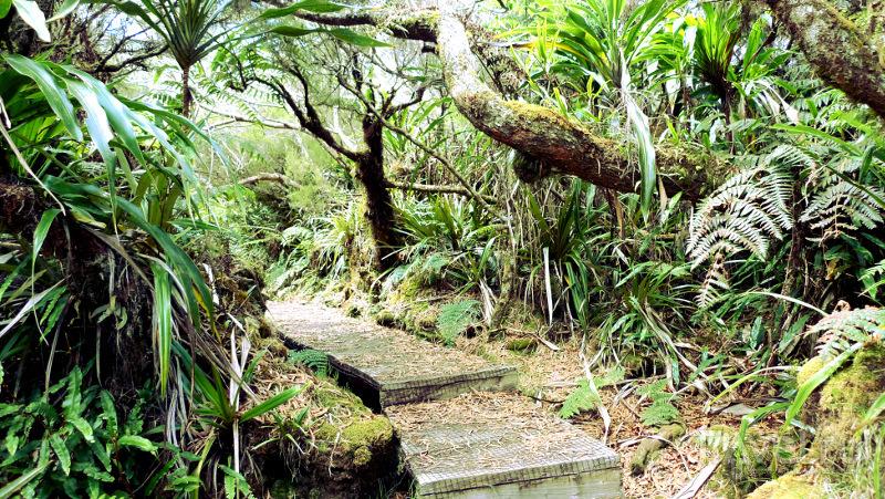 Дорогу к смотровой площадке сквозь джунгли нельзя назвать легкой / Реюньон