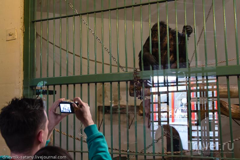Белград, Сербия: зоопарк / Сербия