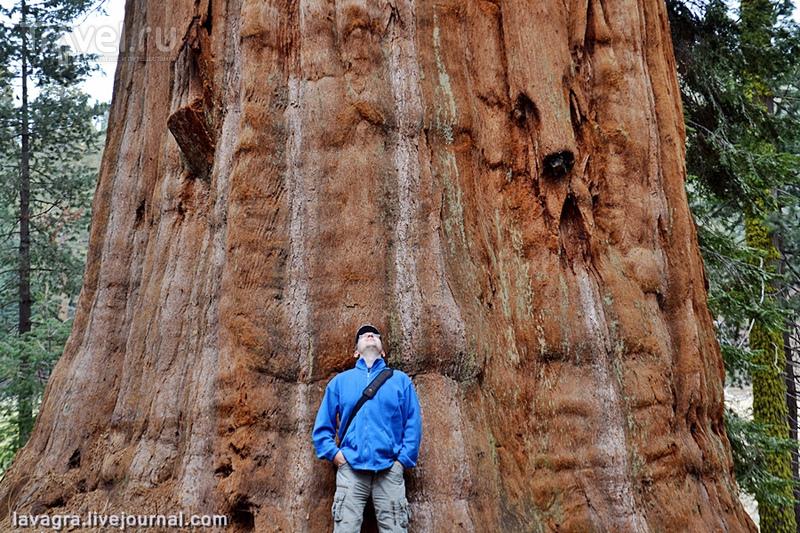 Национальный парк Секвойя / США