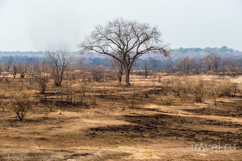 В Замбии / Фото из Замбии