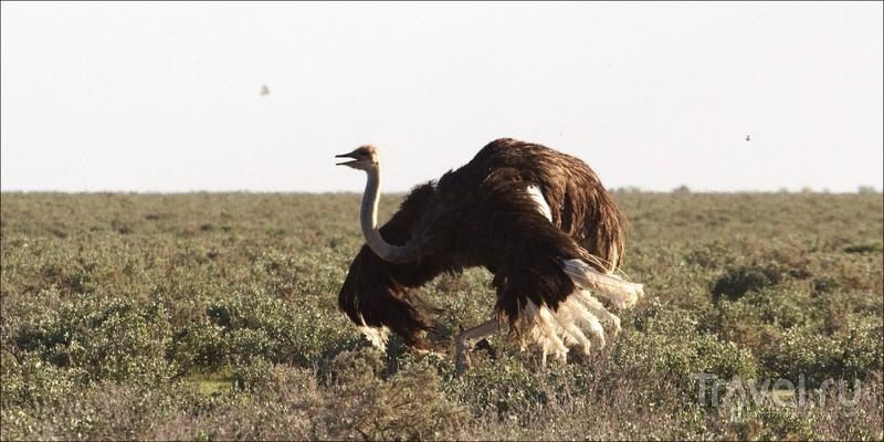 В национальном парке Этоша, Намибия / Фото из Намибии
