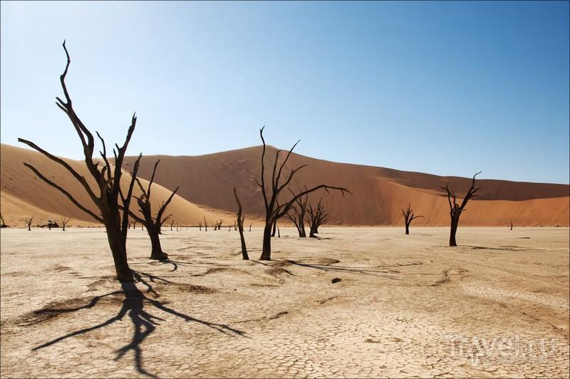 В пустыне Намиб, Намибия / Фото из Намибии