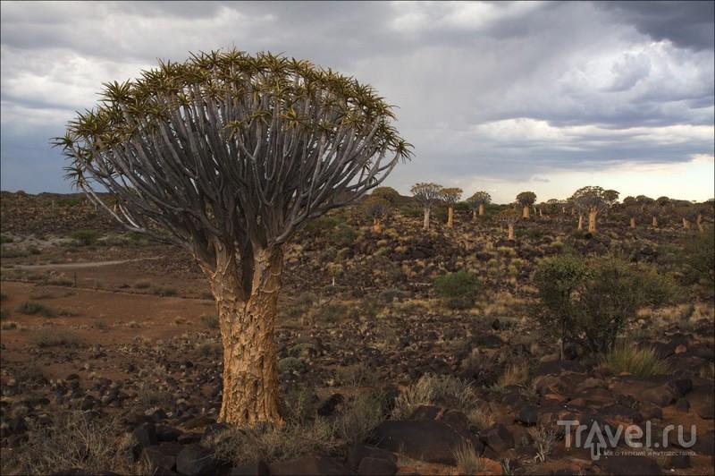 Намибия, пустыня Намиб / Фото из Намибии