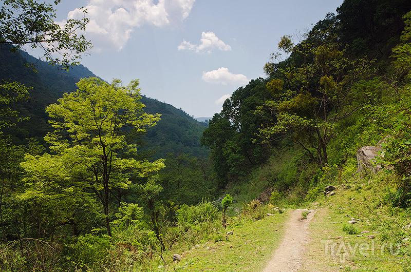 Тропический лес / Фото из Непала