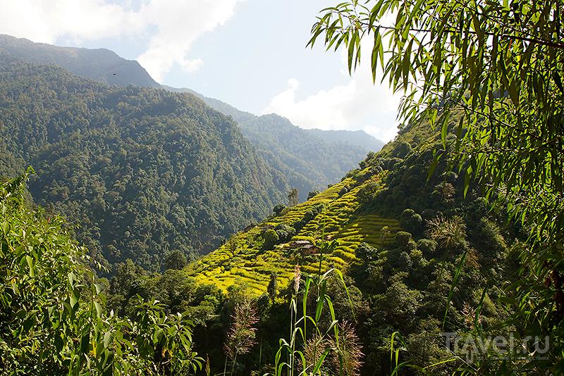 Террасы / Фото из Непала