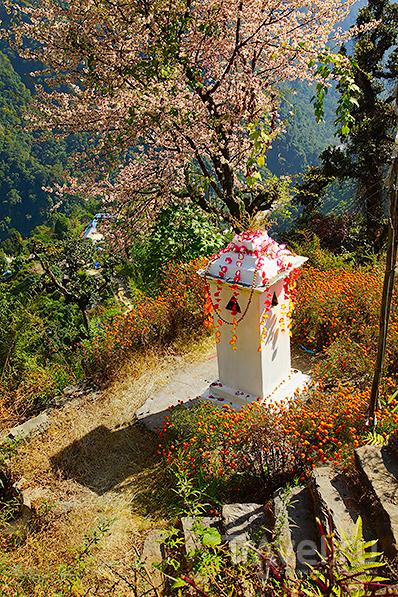 Возле чайной / Фото из Непала
