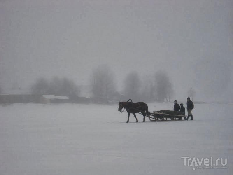 Туманный день в Вершинино / Россия